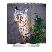 Bobcat Yawn Shower Curtain