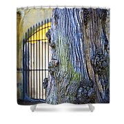Boboli Garden Ancient Tree Shower Curtain
