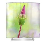 Bocciolo Di Gazanie Shower Curtain