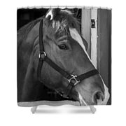 Bode 15061b Shower Curtain