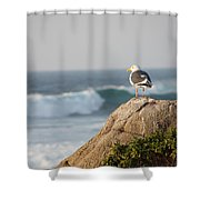 California Gull 2 - Bodega Head Sentinel  Shower Curtain