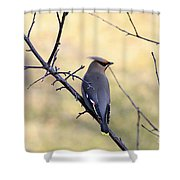 Bohemian Cedar Waxwing In Spring Shower Curtain