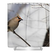 Bohemian Waxwing 2 Shower Curtain