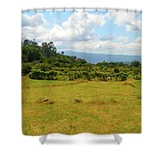 Boimo  Shower Curtain