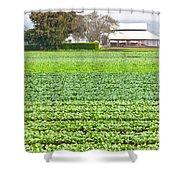 Bok Choy Field And Farm Shower Curtain