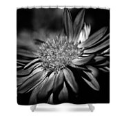 Bold Black And White Flower Shower Curtain