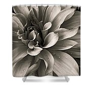 Bold Bloom Shower Curtain