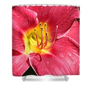 Bold Shower Curtain