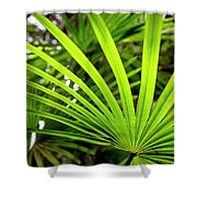 Bold Fronds 1 Shower Curtain