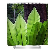 Bold Fronds 11 Shower Curtain