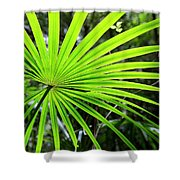 Bold Fronds 3 Shower Curtain