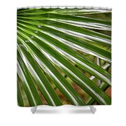 Bold Fronds 4 Shower Curtain
