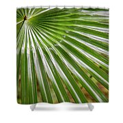 Bold Fronds 5 Shower Curtain