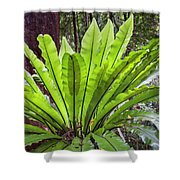 Bold Fronds 8 Shower Curtain