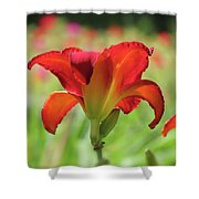 Bold Red - Daylily Shower Curtain