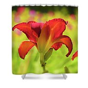Bold Red Gold - Daylily Shower Curtain