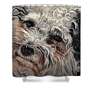 Bolognese Breed Shower Curtain