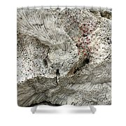 Bonaire Coral And Shells 1 Shower Curtain
