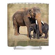 Bonding - Asian Elephants Houston Zoo Shower Curtain