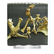 Bone Creatures One Shower Curtain