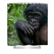 Bonobo Pan Paniscus Juvenile Orphan Shower Curtain