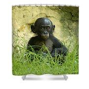 Bonobo Tyke Shower Curtain