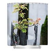 Bonsai Mountain-ash Shower Curtain
