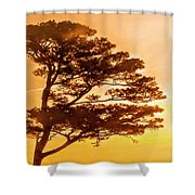 Bonsai Pine Sunrise Shower Curtain