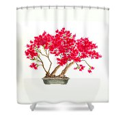 Bonsai Tree - Kurume Azalea Shower Curtain