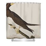 Booby Gannet   Shower Curtain