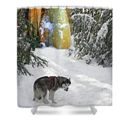 Boofies Great Adventure Shower Curtain