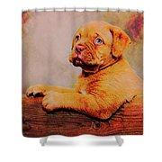 Bordeaux Mastiff Pup Shower Curtain