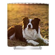 Border Collie At Sunset With Warm Colors Shower Curtain