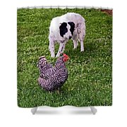 Border Collie Herding Chicken Shower Curtain