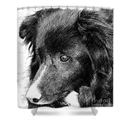 Border Collie In Pencil Shower Curtain by Smilin Eyes  Treasures