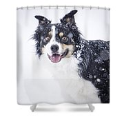 Border Collie In The Snow Shower Curtain