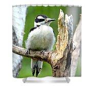 Boring Wood  Shower Curtain