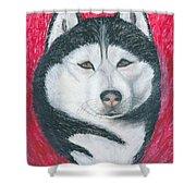 Boris The Siberian Husky Shower Curtain