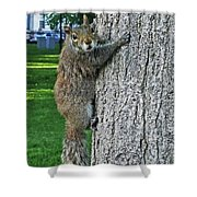 Boston Common Squirrel Hanging From A Tree Boston Ma Shower Curtain