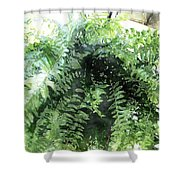Boston Fern With Visitor Shower Curtain