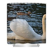 Boston Public Garden Swan Amongst The Ducks Ruffled Feathers Shower Curtain