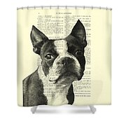 Boston Terrier Portrait In Black And White Shower Curtain