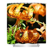 Botanical Art Prints Orange Tiger Lilies Master Gardener Baslee Troutman Shower Curtain