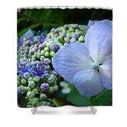 Botanical Garden Blue Hydrangea Flowers Baslee Troutman Shower Curtain