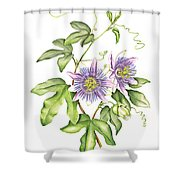 Botanical Illustration Passion Flower Shower Curtain