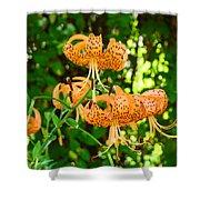 Botanical Master Gardens Art Prints Orange Tiger Lilies Baslee Troutman Shower Curtain