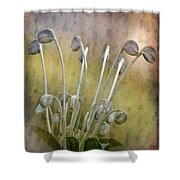Botanical Specimen Shower Curtain