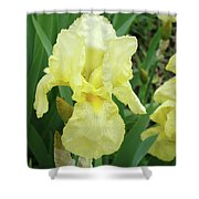 Botanical Yellow Iris Flower Summer Floral Art Baslee Troutman Shower Curtain