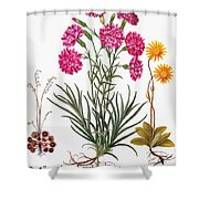Botany: Flowers, 1613 Shower Curtain