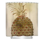 Botany: Pineapple, 1585 Shower Curtain